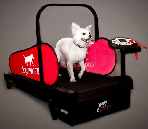 Dog Pacer Treadmill
